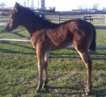 Foal out of My Hottest Fantasy