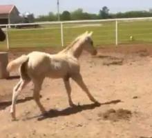 """Machine Made Foal out of """"Zip n Therapy"""""""